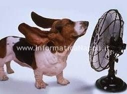 cane ventilatore